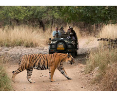 •	Golden Triangle Tour with a spice of Wildlife