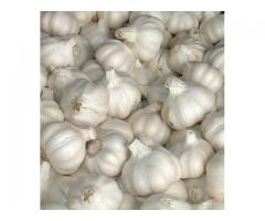 Top quality Garlic for sale